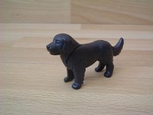 Chien Saint-bernard noir