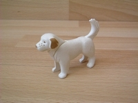 Chien Saint-bernard blanc