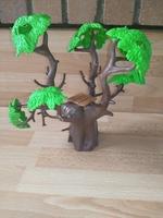 Arbre baobab